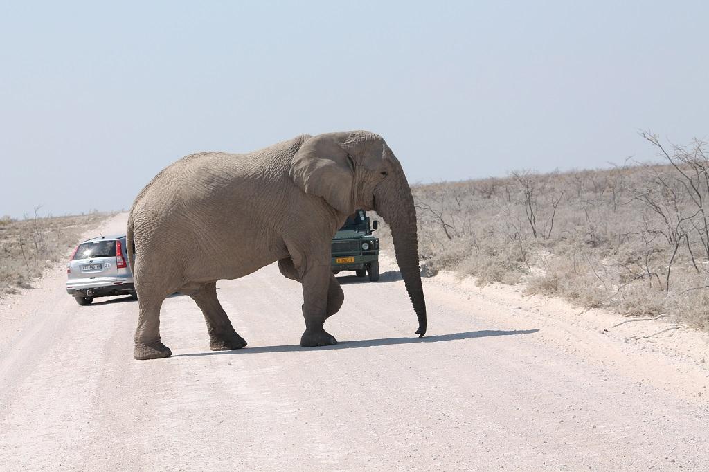 Afrika 2013 – Namíbia (severná časť)
