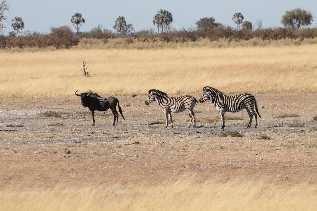 Afrika 2013 - Botswana