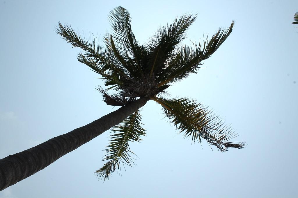 Ako sme sa (ne)dostali na Havaj