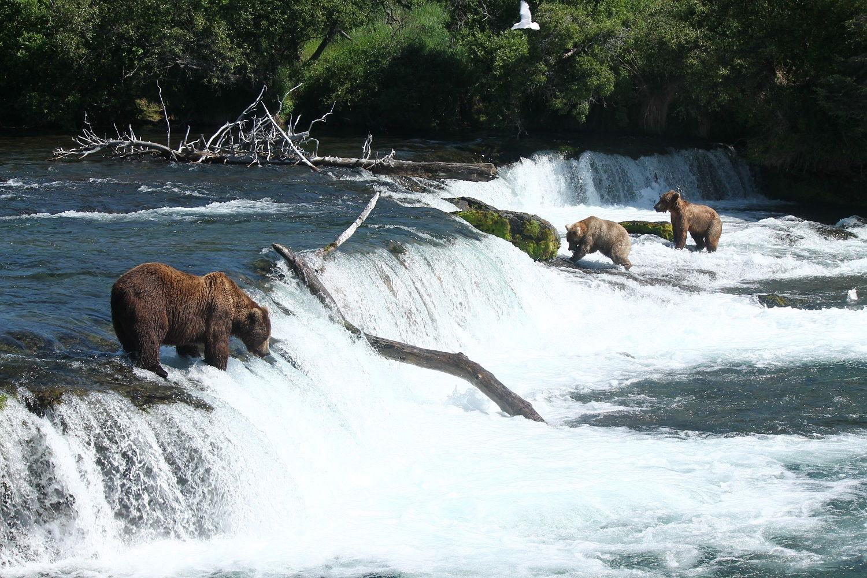 Aljaška: Pozorovanie medveďov pri Brooks Falls v Národnom parku Katmai