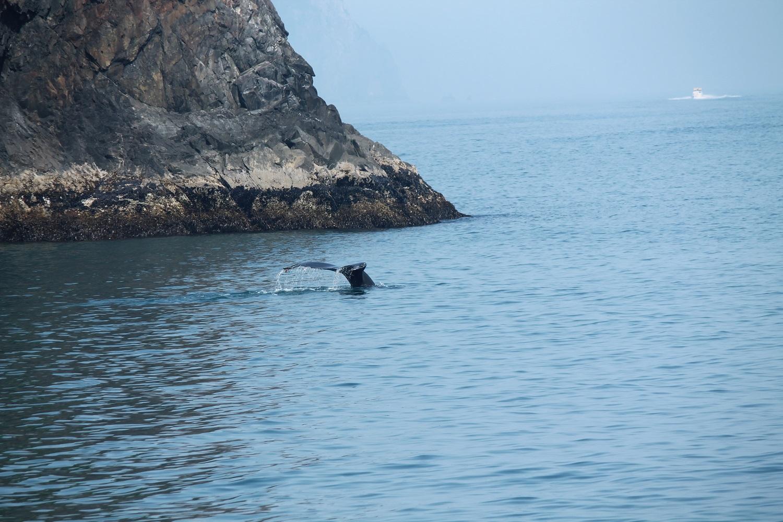 Aljaška: Pozorovanie veľrýb v okolí Sewardu