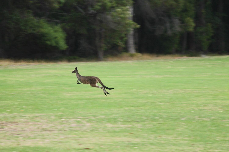 Podrobný návod na turistické víza do Austrálie