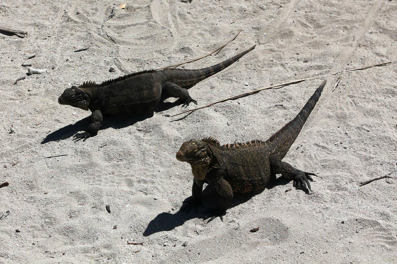 Cayo Iguana - Na ostrov leguánov