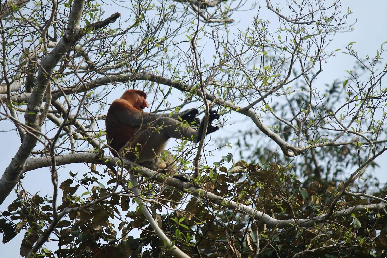 Borneo - ostrov nosatých opíc